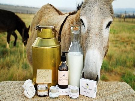 خوردن شیر الاغ, سم زایی کبد با شیر الاغ, زیبایی پوست با شیر الاغ ,آشنایی با خواص تغذیه ای و سلامتی شیر الاغ,properties donkey milk,