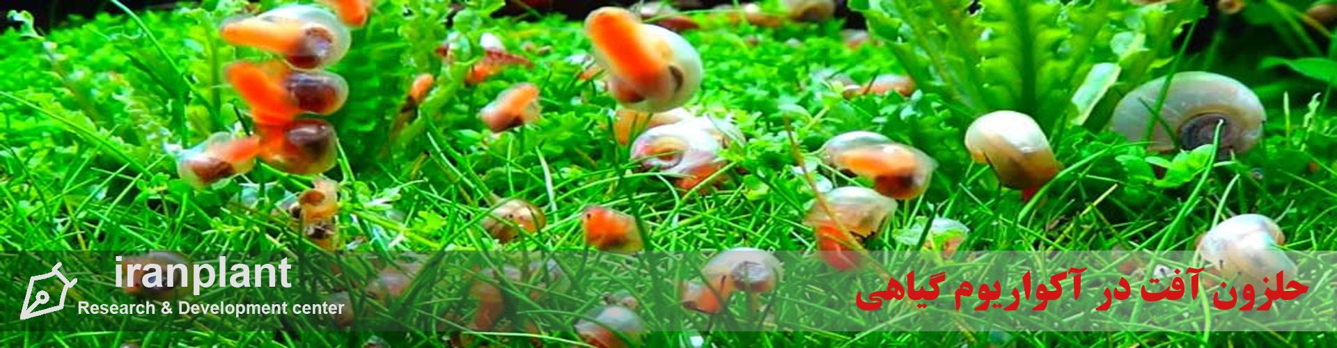 حلزون آفت در آکواریوم گیاهی